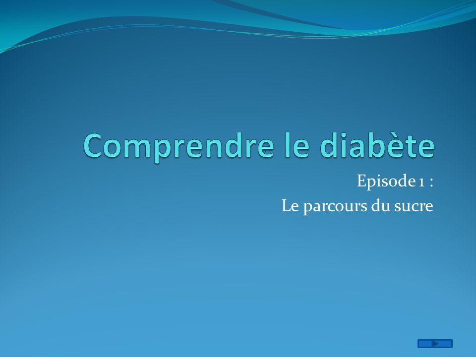 Episode 1 : Le parcours du sucre