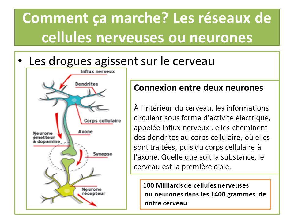 Comment ça marche? Les réseaux de cellules nerveuses ou neurones Les drogues agissent sur le cerveau Connexion entre deux neurones À l'intérieur du ce