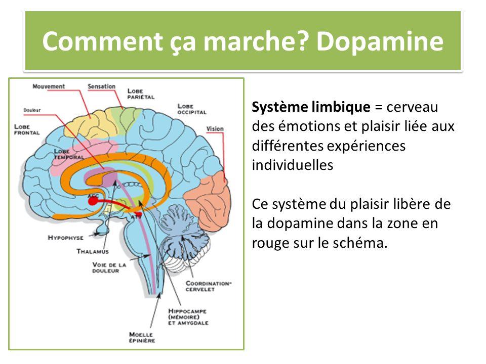Comment ça marche? Dopamine Système limbique = cerveau des émotions et plaisir liée aux différentes expériences individuelles Ce système du plaisir li
