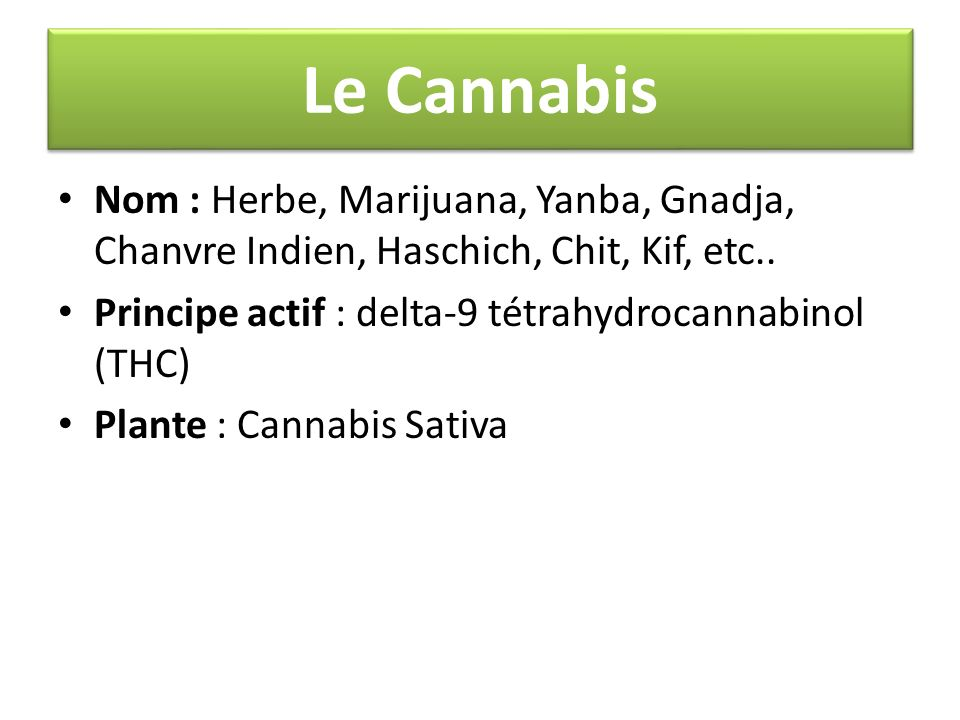 Le Cannabis Nom : Herbe, Marijuana, Yanba, Gnadja, Chanvre Indien, Haschich, Chit, Kif, etc.. Principe actif : delta-9 tétrahydrocannabinol (THC) Plan