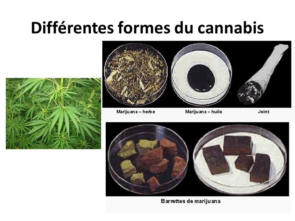 Différentes formes du cannabis
