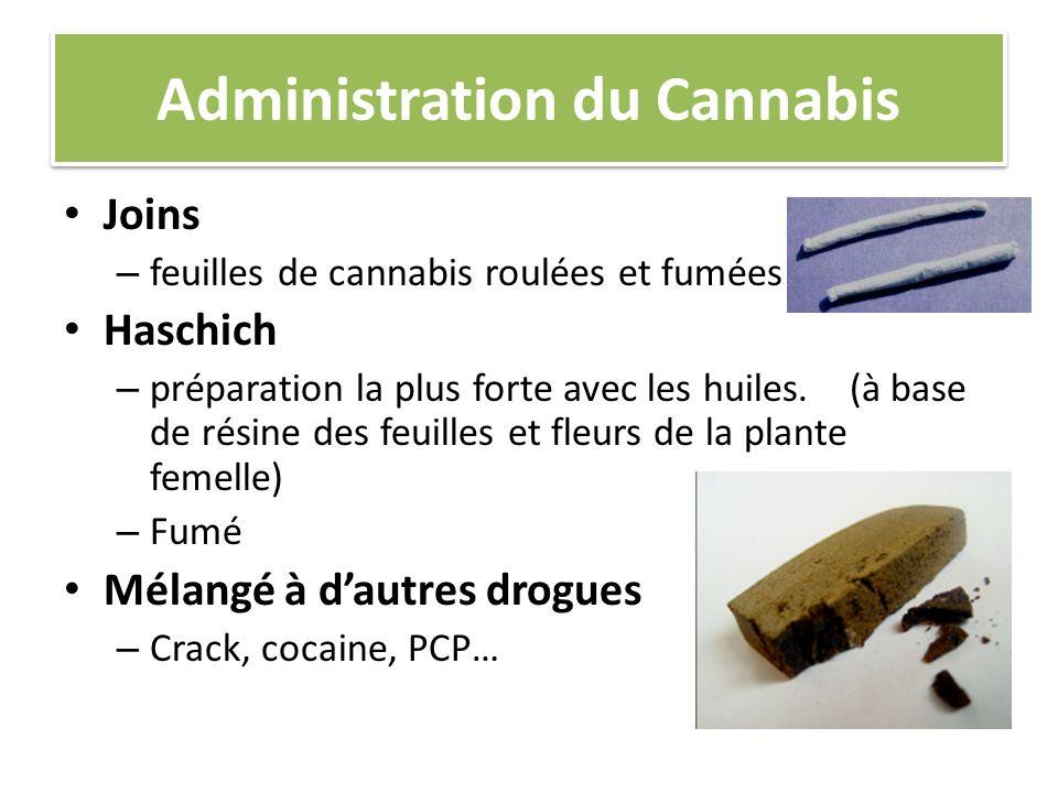 Administration du Cannabis Joins – feuilles de cannabis roulées et fumées Haschich – préparation la plus forte avec les huiles. (à base de résine des