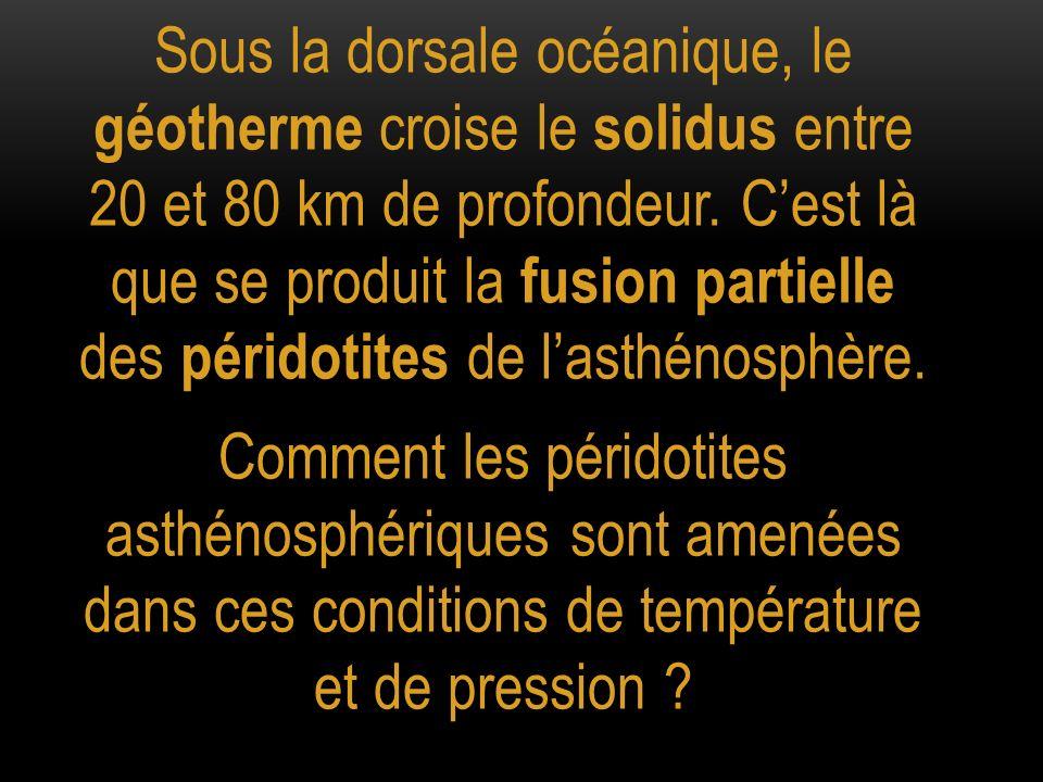 Sous la dorsale océanique, le géotherme croise le solidus entre 20 et 80 km de profondeur. Cest là que se produit la fusion partielle des péridotites