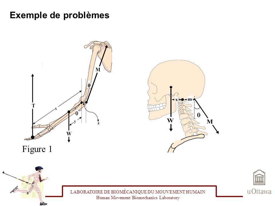 Exemple de problèmes LABORATOIRE DE BIOMÉCANIQUE DU MOUVEMENT HUMAIN Human Movement Biomechanics Laboratory Figure 1