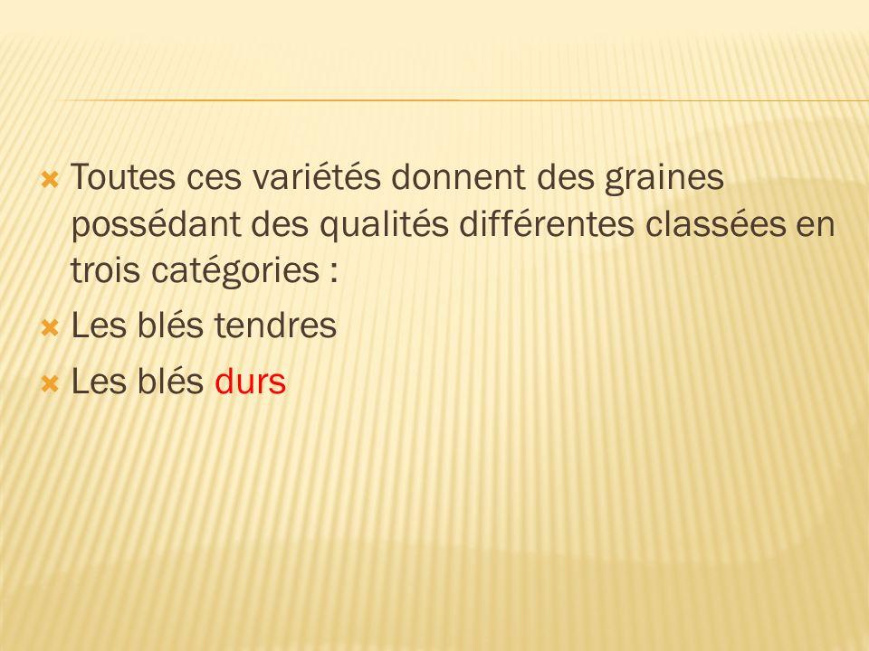 Toutes ces variétés donnent des graines possédant des qualités différentes classées en trois catégories : Les blés tendres Les blés durs