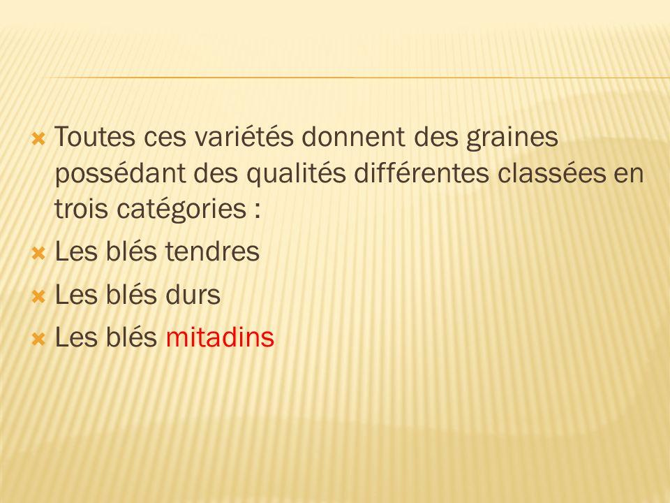Toutes ces variétés donnent des graines possédant des qualités différentes classées en trois catégories : Les blés tendres Les blés durs Les blés mita