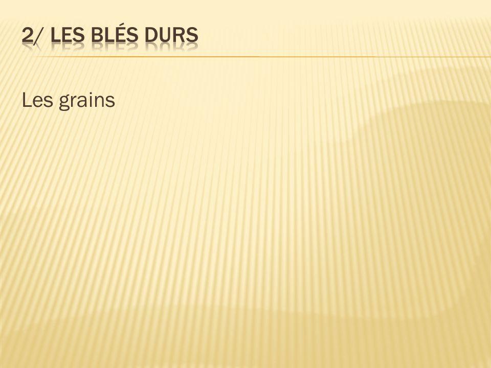 Les grains