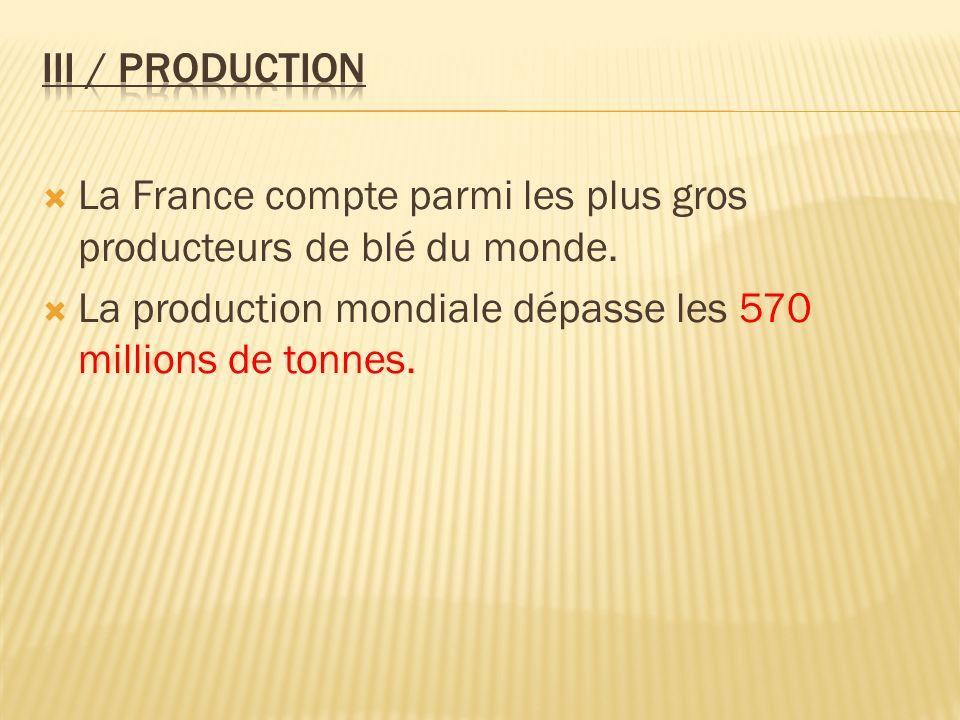 La production mondiale dépasse les 570 millions de tonnes.