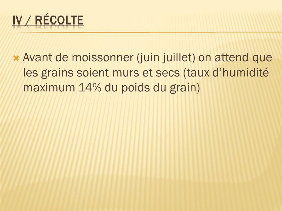 Avant de moissonner (juin juillet) on attend que les grains soient murs et secs (taux dhumidité maximum 14% du poids du grain)