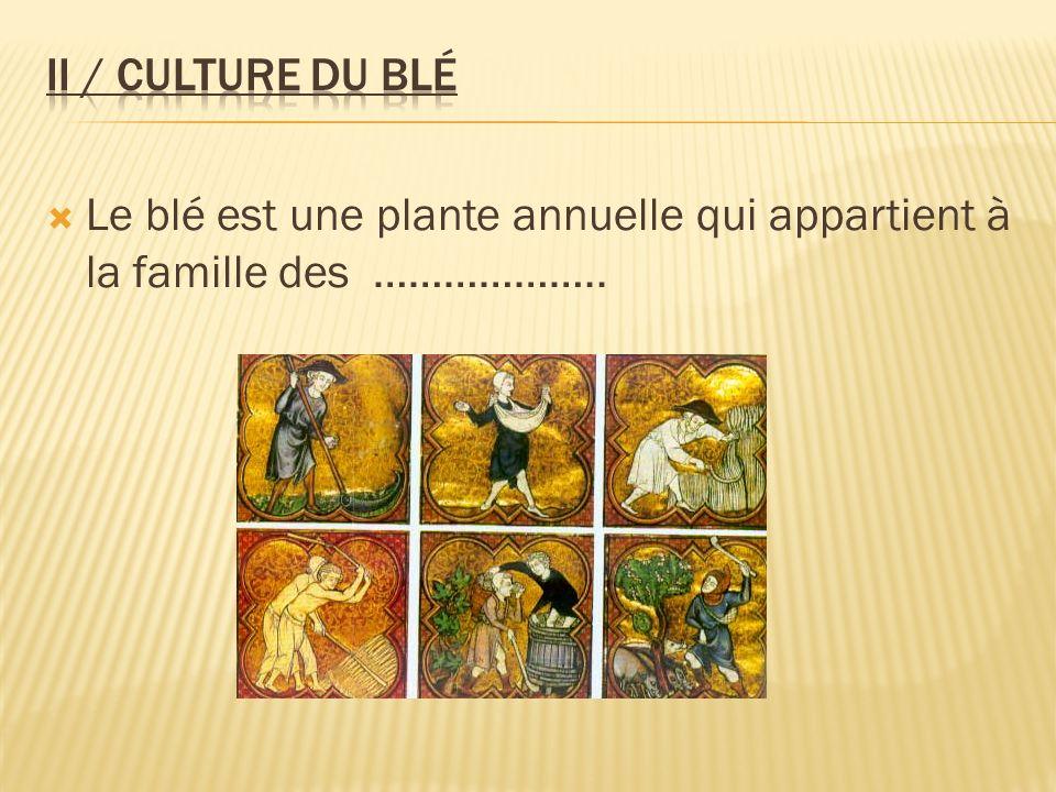 Le blé est une plante annuelle qui appartient à la famille des ………………..