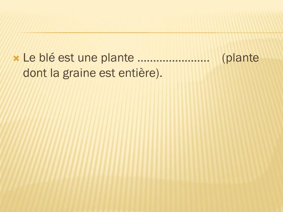 Le blé est une plante ………………….. (plante dont la graine est entière).
