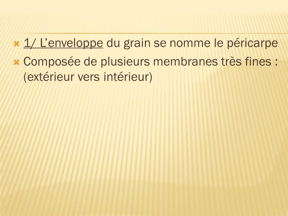 1/ Lenveloppe du grain se nomme le péricarpe Composée de plusieurs membranes très fines : (extérieur vers intérieur)