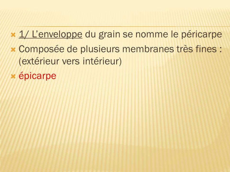 1/ Lenveloppe du grain se nomme le péricarpe Composée de plusieurs membranes très fines : (extérieur vers intérieur) épicarpe