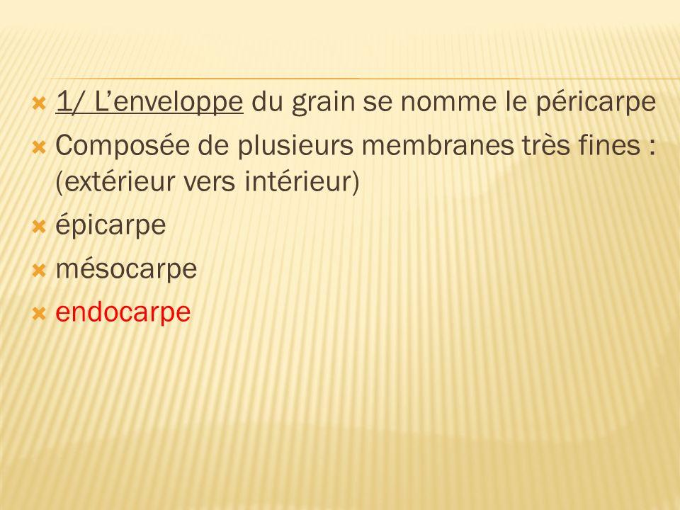 1/ Lenveloppe du grain se nomme le péricarpe Composée de plusieurs membranes très fines : (extérieur vers intérieur) épicarpe mésocarpe endocarpe
