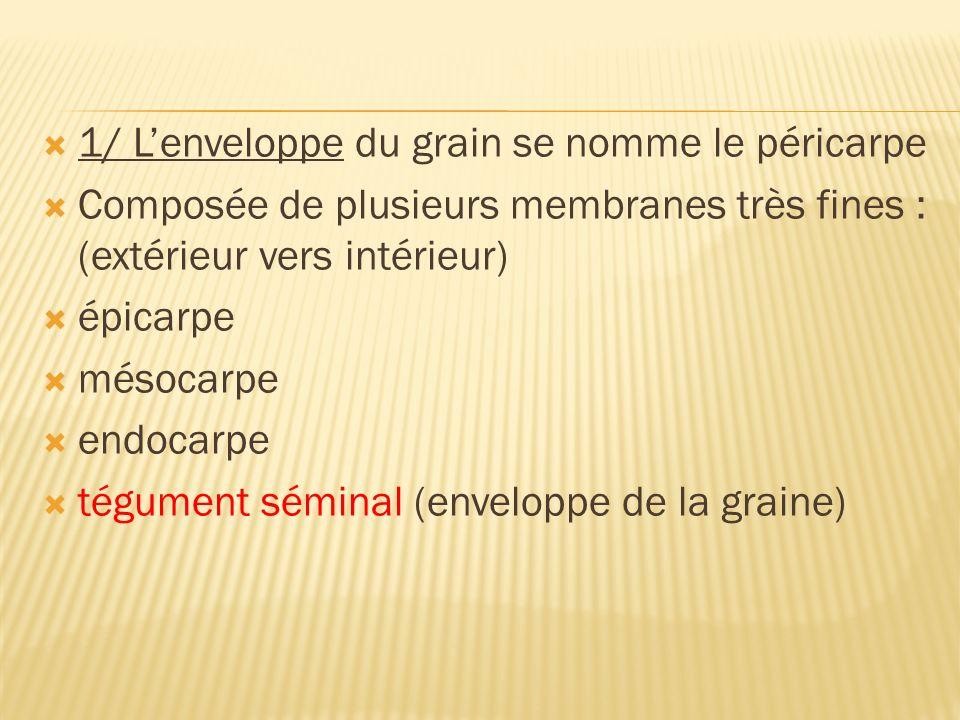 1/ Lenveloppe du grain se nomme le péricarpe Composée de plusieurs membranes très fines : (extérieur vers intérieur) épicarpe mésocarpe endocarpe tégu