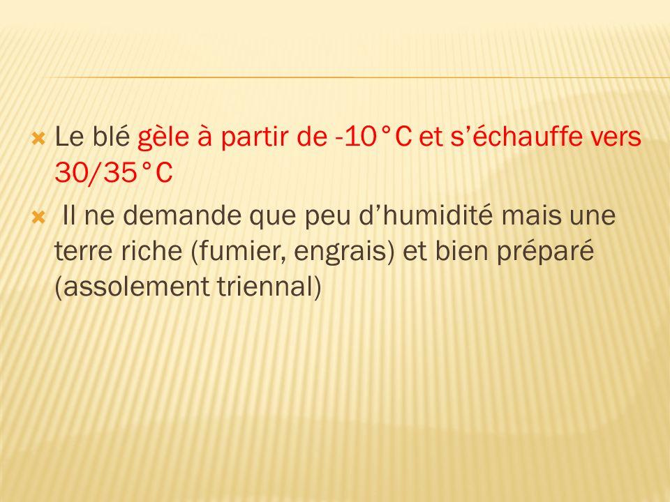 Le blé gèle à partir de -10°C et séchauffe vers 30/35°C Il ne demande que peu dhumidité mais une terre riche (fumier, engrais) et bien préparé (assole