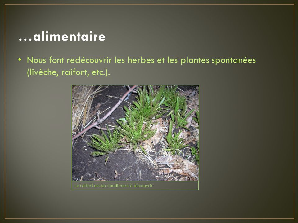 …alimentaire Nous font redécouvrir les herbes et les plantes spontanées (livèche, raifort, etc.).