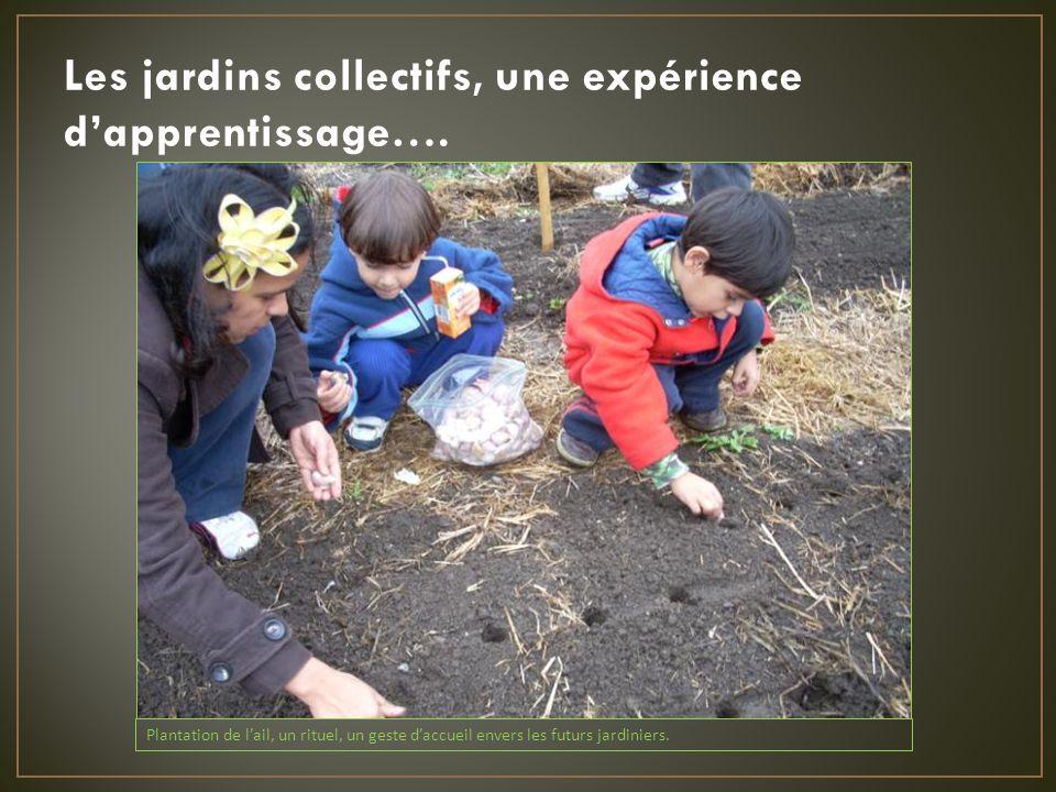 Les jardins collectifs, une expérience dapprentissage….