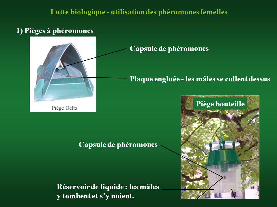 Lutte biologique - utilisation des phéromones femelles 1) Pièges à phéromones Capsule de phéromones Plaque engluée - les mâles se collent dessus Capsu