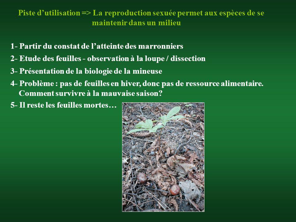 Piste dutilisation => La reproduction sexuée permet aux espèces de se maintenir dans un milieu 1- Partir du constat de latteinte des marronniers 4- Pr