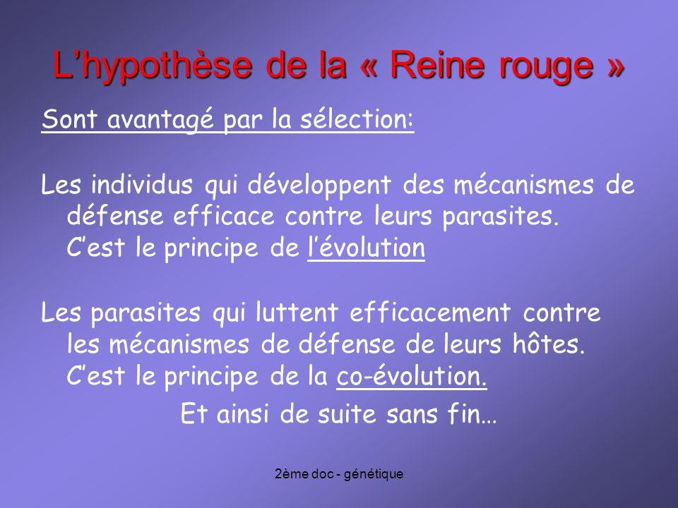2ème doc - génétique Lhypothèse de la « Reine rouge » Sont avantagé par la sélection: Les individus qui développent des mécanismes de défense efficace
