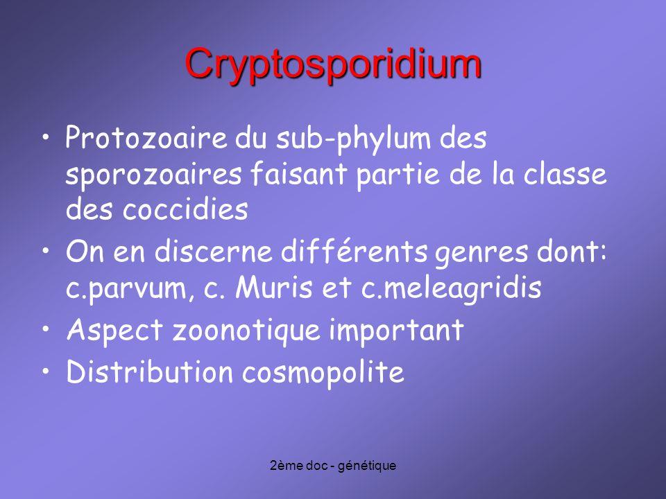 2ème doc - génétique Cryptosporidium Protozoaire du sub-phylum des sporozoaires faisant partie de la classe des coccidies On en discerne différents ge