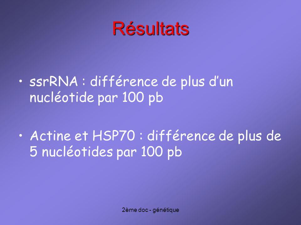 2ème doc - génétique Résultats ssrRNA : différence de plus dun nucléotide par 100 pb Actine et HSP70 : différence de plus de 5 nucléotides par 100 pb