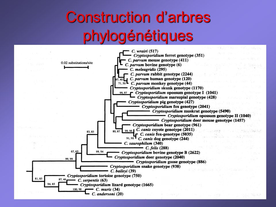 2ème doc - génétique Construction darbres phylogénétiques