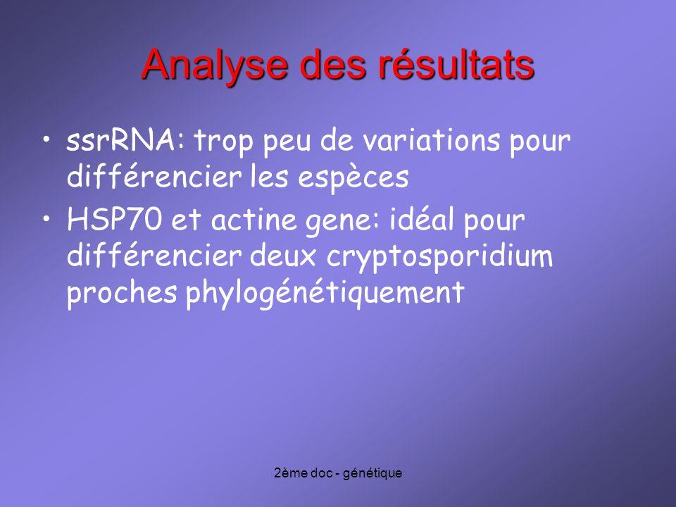 2ème doc - génétique Analyse des résultats ssrRNA: trop peu de variations pour différencier les espèces HSP70 et actine gene: idéal pour différencier