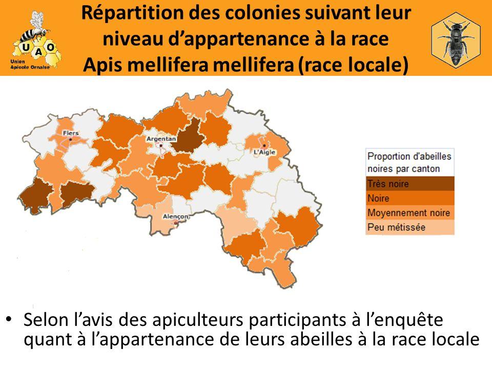 Répartition des colonies suivant leur niveau dappartenance à la race Apis mellifera mellifera (race locale) Selon lavis des apiculteurs participants à