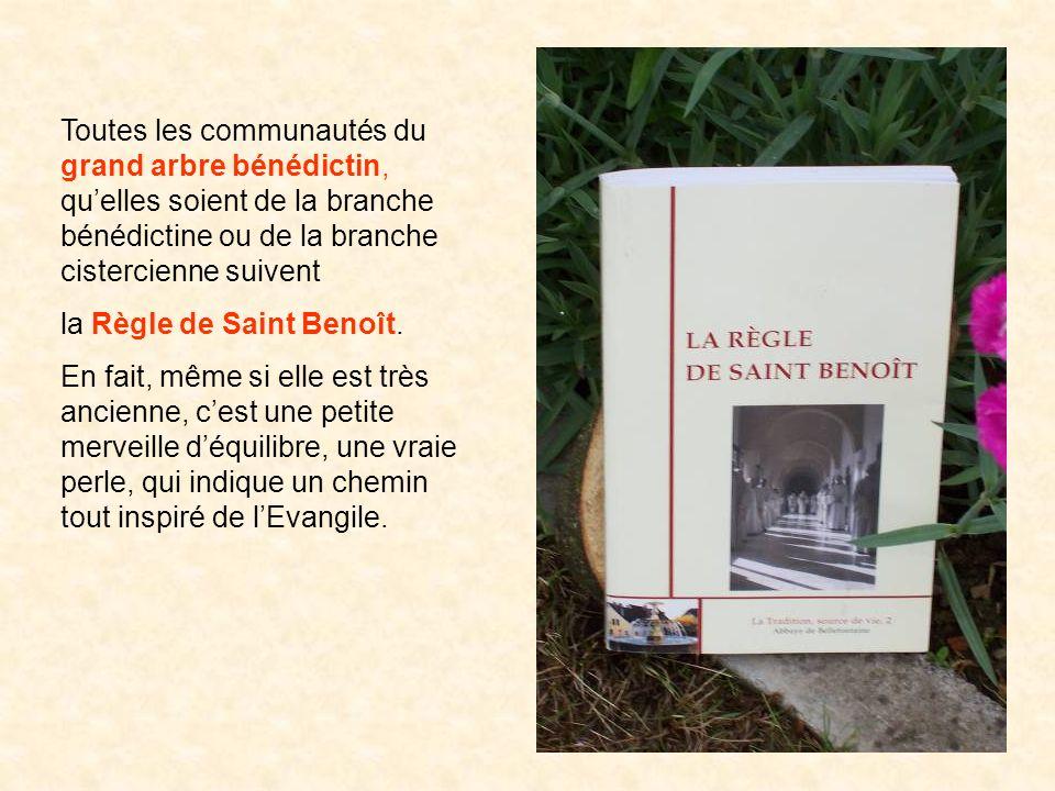 Toutes les communautés du grand arbre bénédictin, quelles soient de la branche bénédictine ou de la branche cistercienne suivent la Règle de Saint Ben