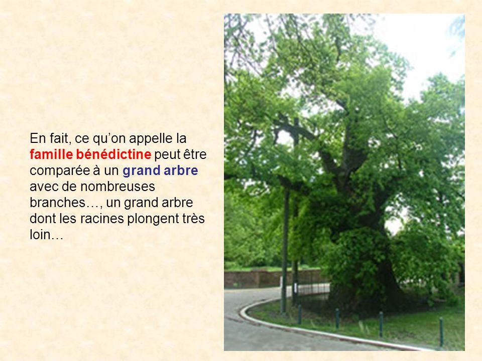 En fait, ce quon appelle la famille bénédictine peut être comparée à un grand arbre avec de nombreuses branches…, un grand arbre dont les racines plon