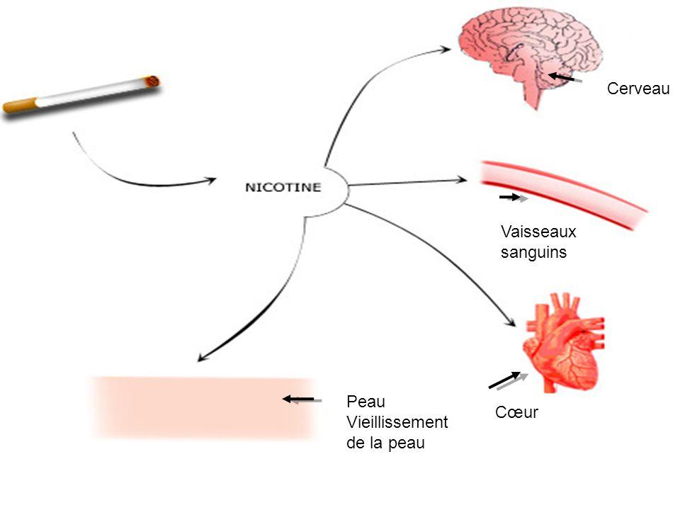 Page 6 Cerveau Vaisseaux sanguins Cœur Peau Vieillissement de la peau