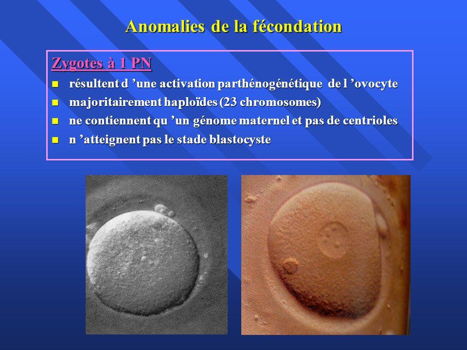 Anomalies de la fécondation Zygotes à 1 PN résultent d une activation parthénogénétique de l ovocyte résultent d une activation parthénogénétique de l