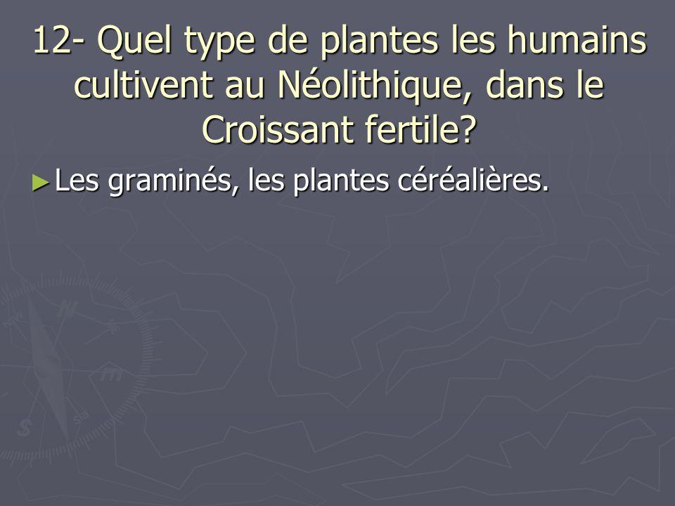 12- Quel type de plantes les humains cultivent au Néolithique, dans le Croissant fertile? Les graminés, les plantes céréalières. Les graminés, les pla