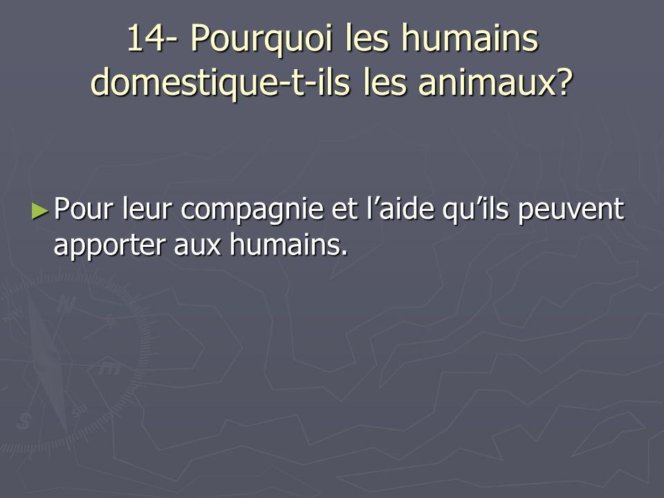 14- Pourquoi les humains domestique-t-ils les animaux? Pour leur compagnie et laide quils peuvent apporter aux humains. Pour leur compagnie et laide q