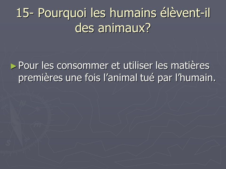 15- Pourquoi les humains élèvent-il des animaux? Pour les consommer et utiliser les matières premières une fois lanimal tué par lhumain. Pour les cons