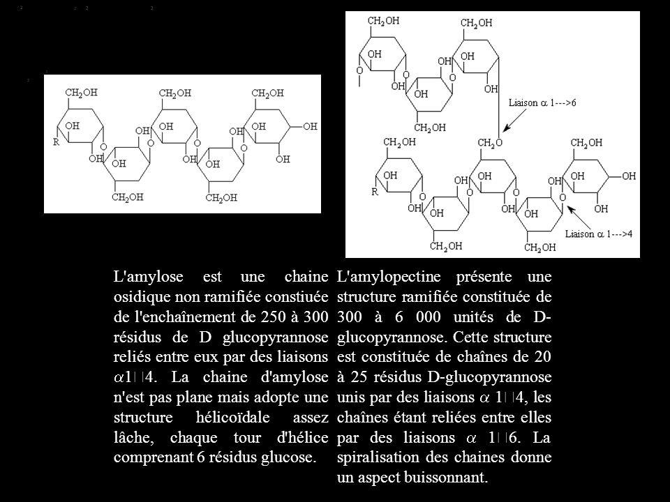 L'amylose est une chaine osidique non ramifiée constiuée de l'enchaînement de 250 à 300 résidus de D glucopyrannose reliés entre eux par des liaisons