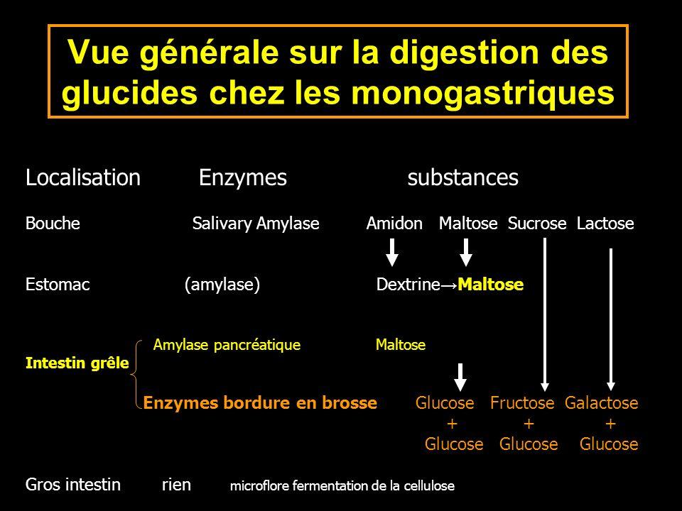Localisation Enzymes substances Bouche Salivary Amylase Amidon Maltose Sucrose Lactose Estomac (amylase) Dextrine Maltose Amylase pancréatique Maltose