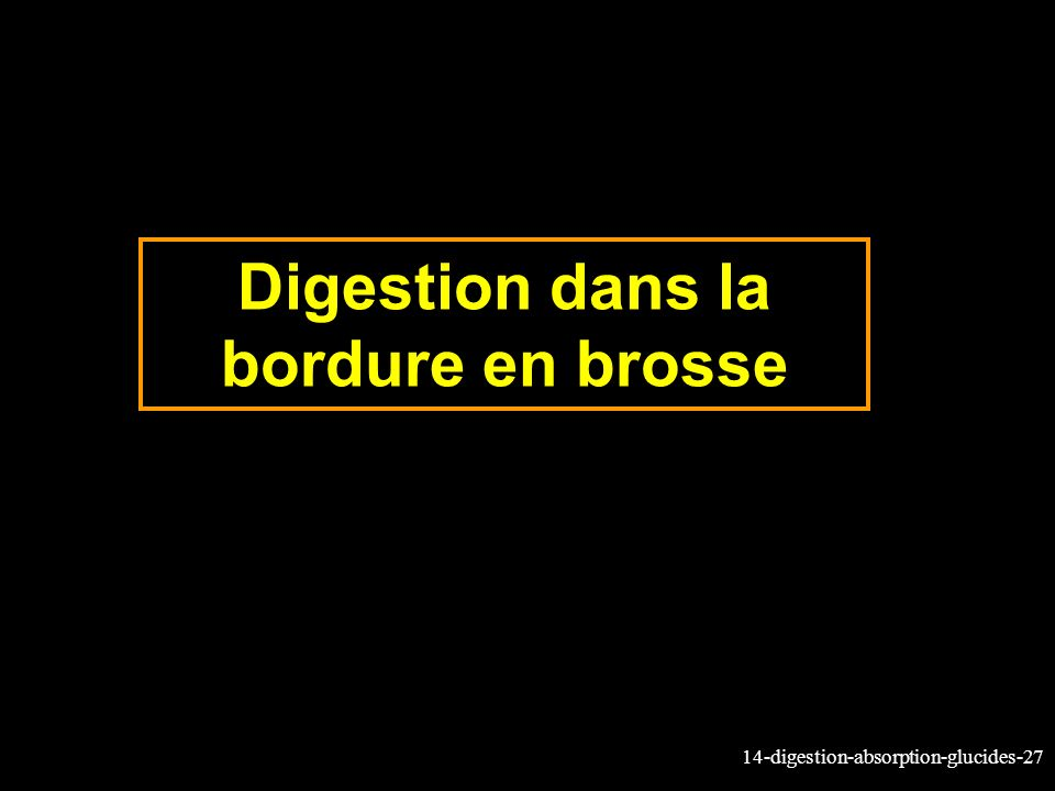 14-digestion-absorption-glucides-27 Digestion dans la bordure en brosse