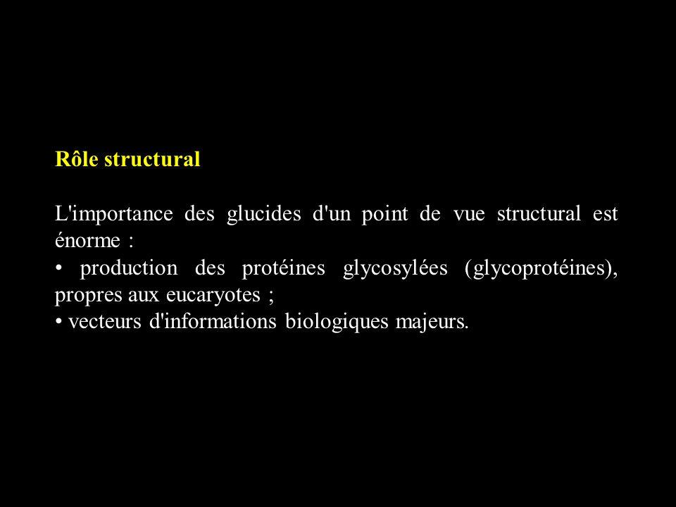 Rôle structural L'importance des glucides d'un point de vue structural est énorme : production des protéines glycosylées (glycoprotéines), propres aux
