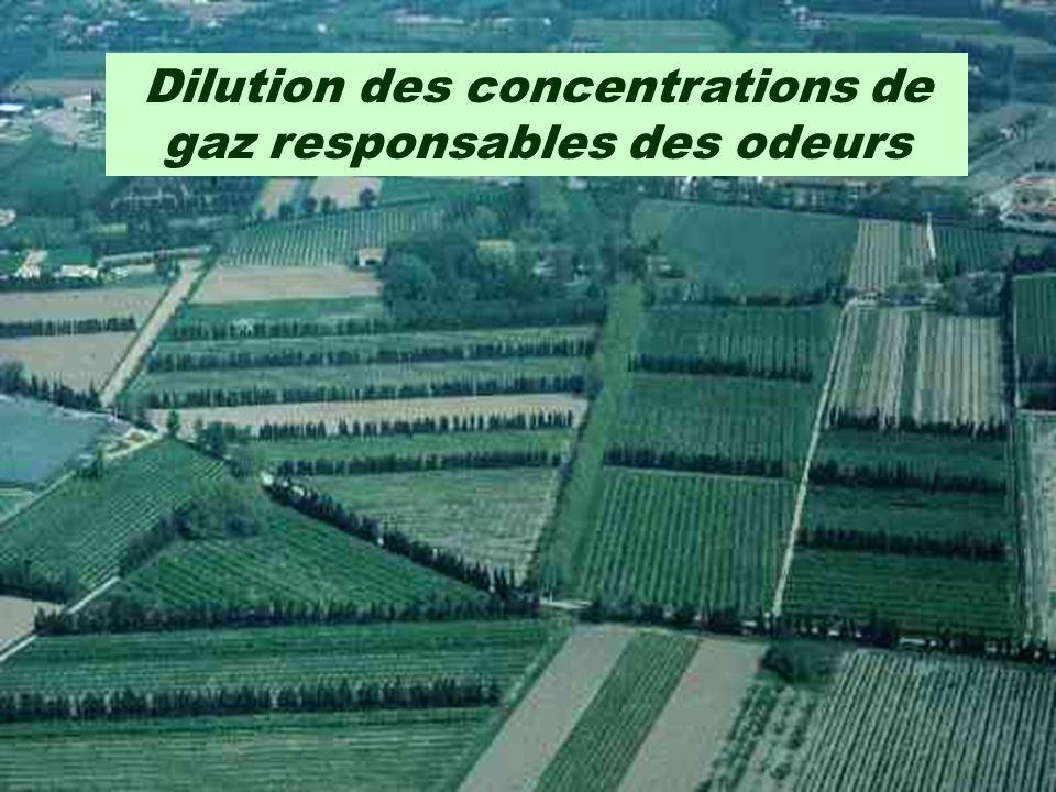 Impact des haies brise-vent sur la réduction des odeurs - dilution des concentrations de gaz; - dépôt des poussières et des aérosols; - interception d