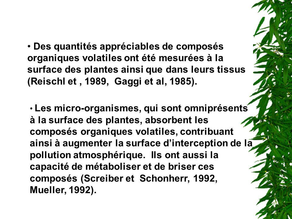 Absorption des composés responsables des odeurs
