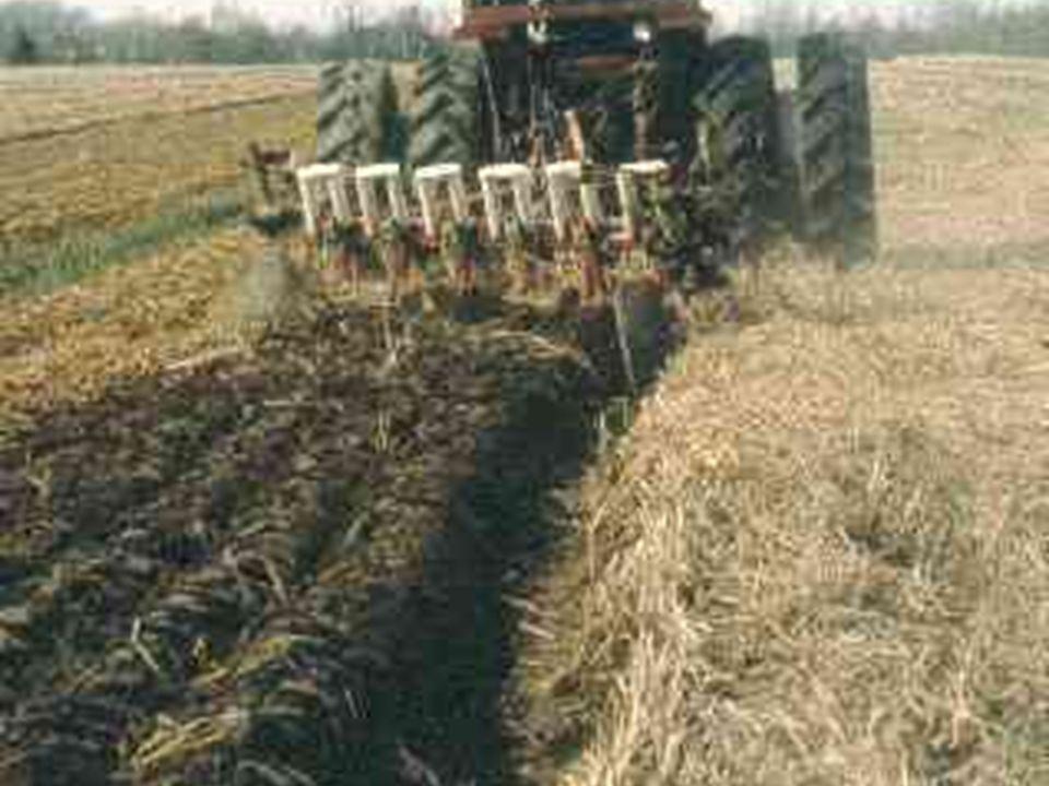Implantation de la haie brise-vent Préparation du sol Entretien Plantation