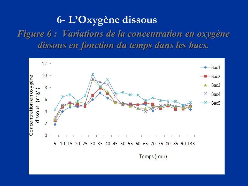 Figure 6 : Variations de la concentration en oxygène dissous en fonction du temps dans les bacs.