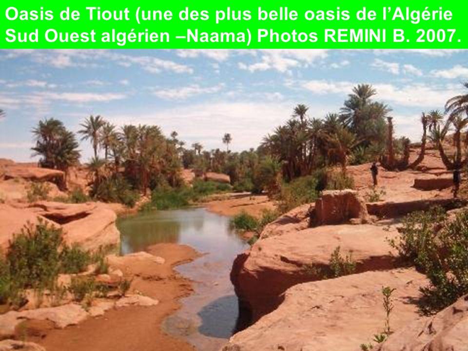 Oasis de Tiout (une des plus belle oasis de lAlgérie Sud Ouest algérien –Naama) Photos REMINI B.