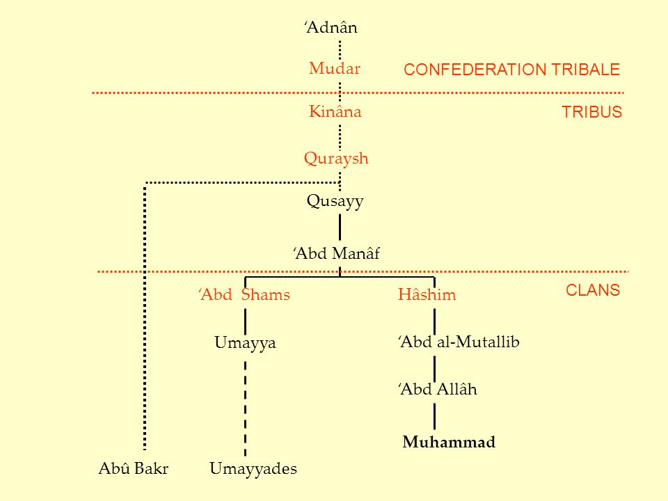 Qusayy Abd Manâf Abd ShamsHâshim Abd al-Mutallib Abd Allâh Muhammad Umayya Umayyades CLANS Adnân Mudar Kinâna Quraysh TRIBUS CONFEDERATION TRIBALE Abû