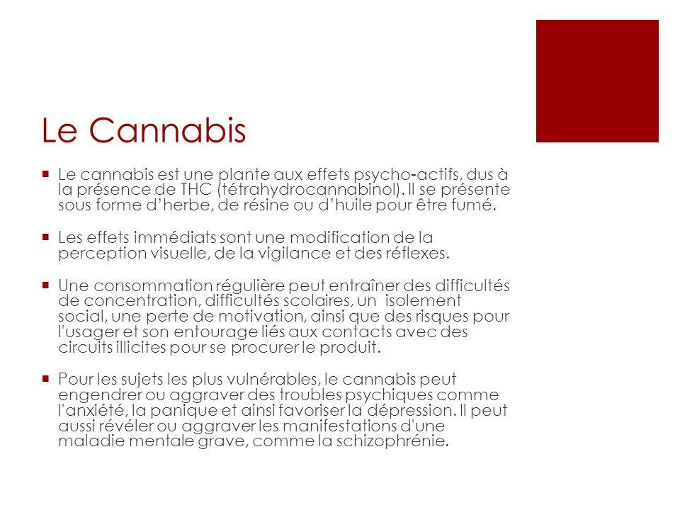 Le Cannabis Le cannabis est une plante aux effets psycho-actifs, dus à la présence de THC (tétrahydrocannabinol).