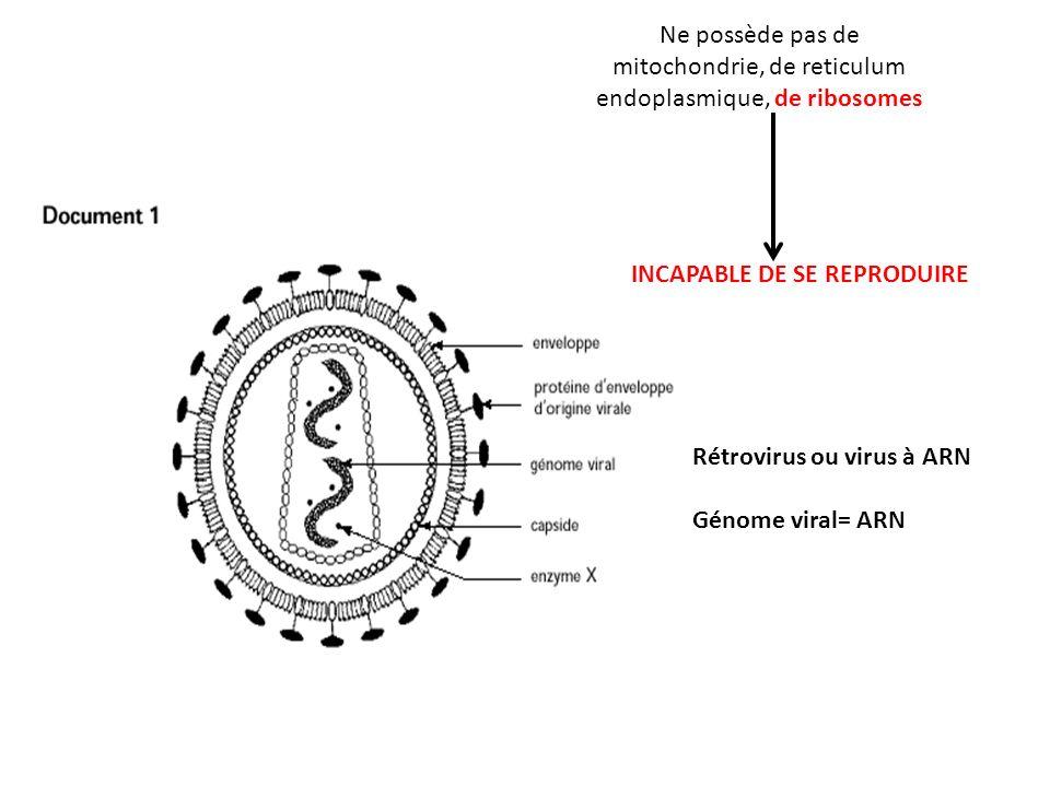 Ne possède pas de mitochondrie, de reticulum endoplasmique, de ribosomes INCAPABLE DE SE REPRODUIRE Rétrovirus ou virus à ARN Génome viral= ARN