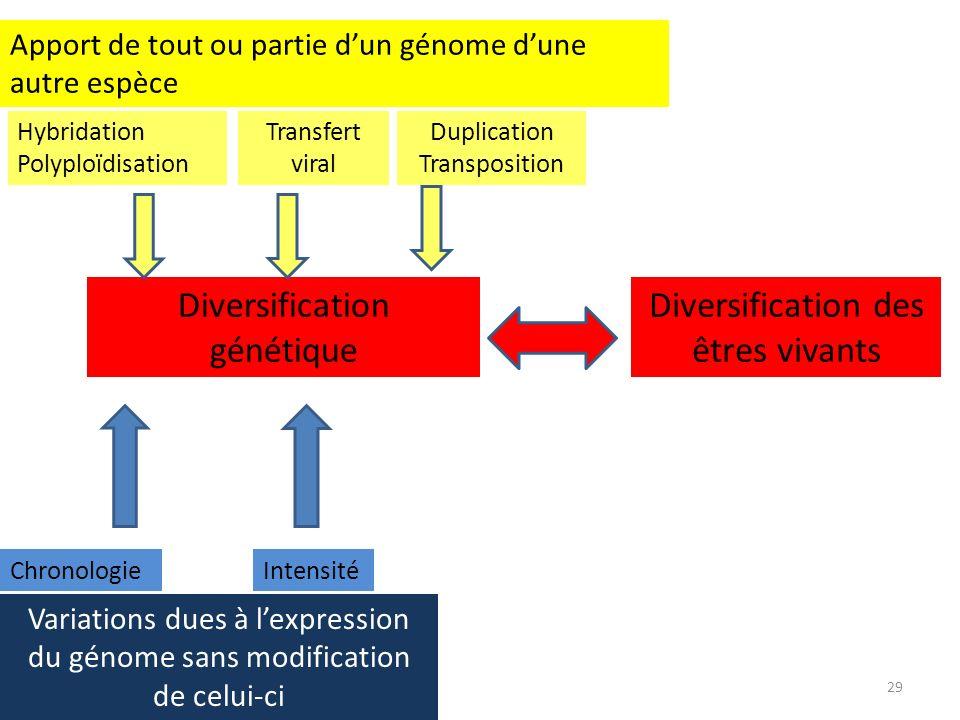 29 Diversification génétique Diversification des êtres vivants Apport de tout ou partie dun génome dune autre espèce Hybridation Polyploïdisation Tran